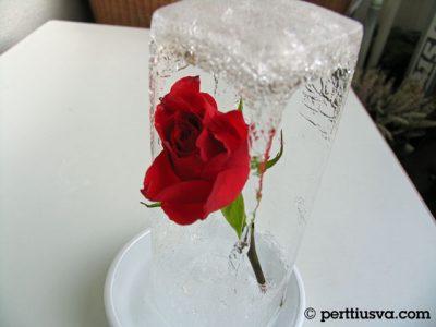 una rosa con un poco de hielo