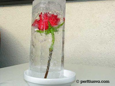 una rosa dentro de hielo
