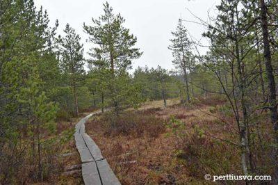un bosque finlandes